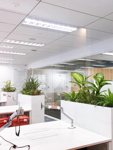 Thiết kế không gian cây xanh