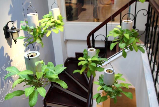 Sky Planter – Phong Cách Trồng Hoa Cây Cảnh Nghệ Thuật