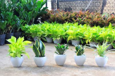 Tham quan vườn ươm cây xanh Tầm Nhìn Châu Á