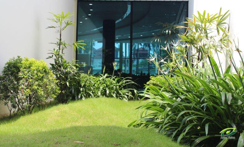 Kỹ thuật duy trì cây bụi, cây trồng thảm trong chăm sóc cây xanh cảnh quan