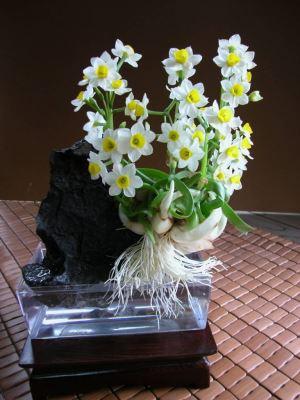 Chậu hoa Thủy Tiên