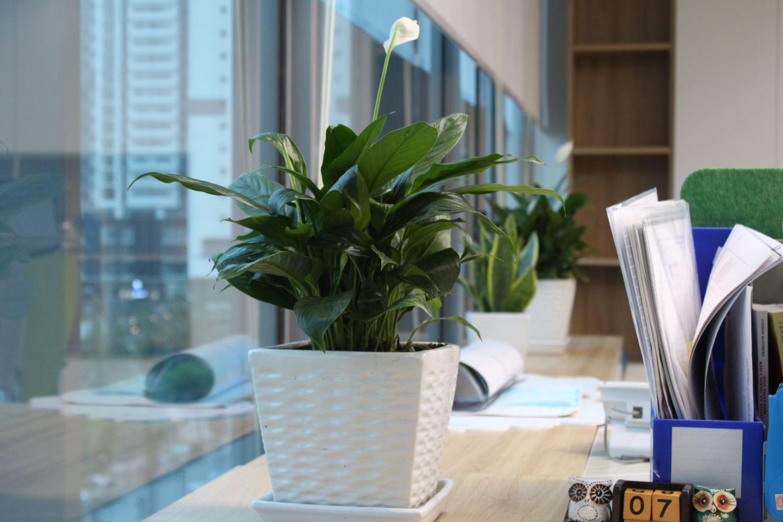 Cây xanh tại Samsung SEV