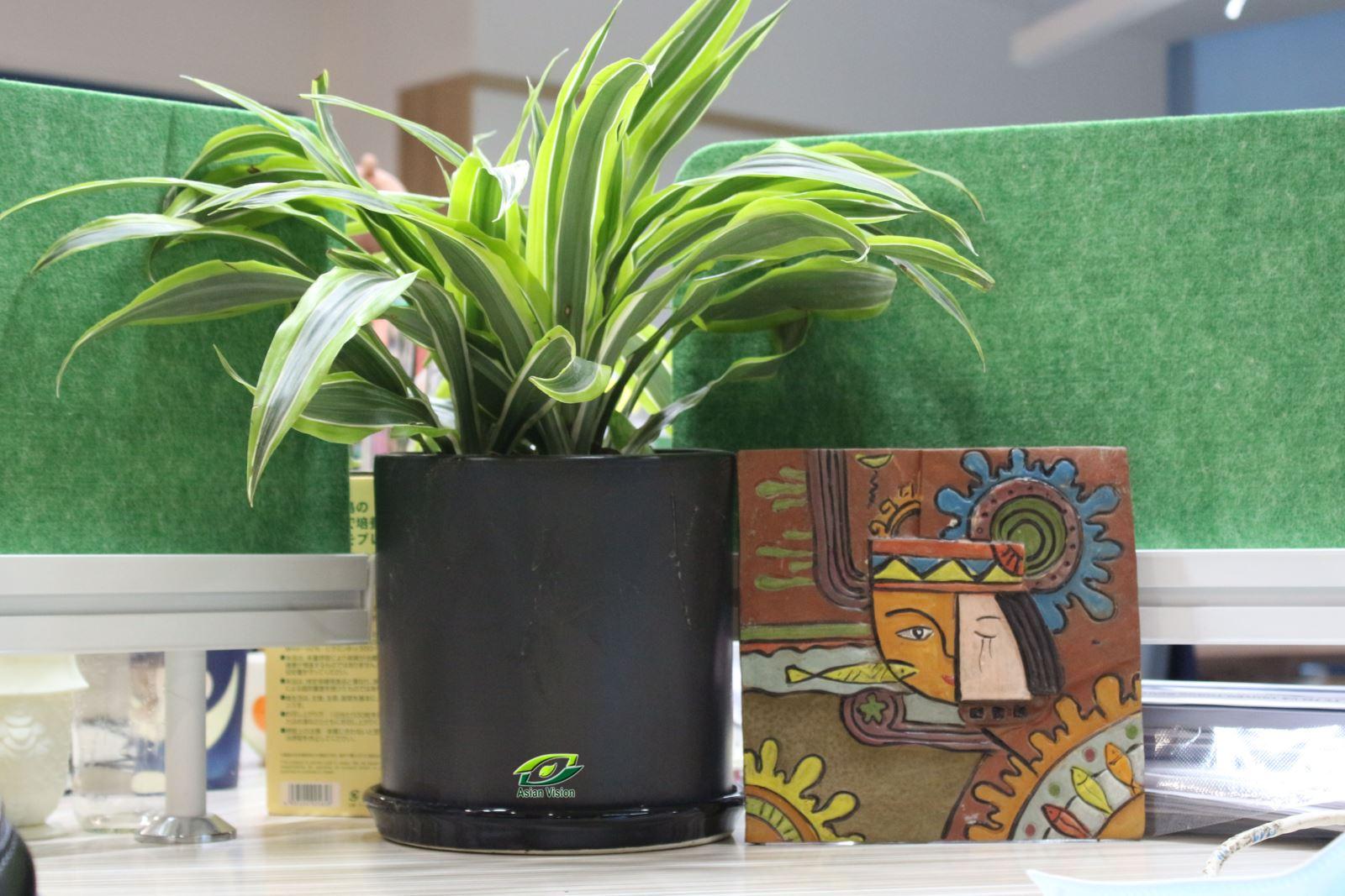 Cây xanh nội thất trong Khu văn phòng ABB