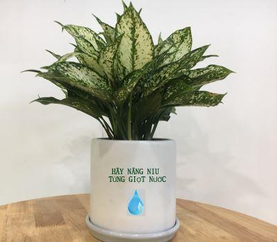 Chậu cây in thông điệp tiết kiệm nước