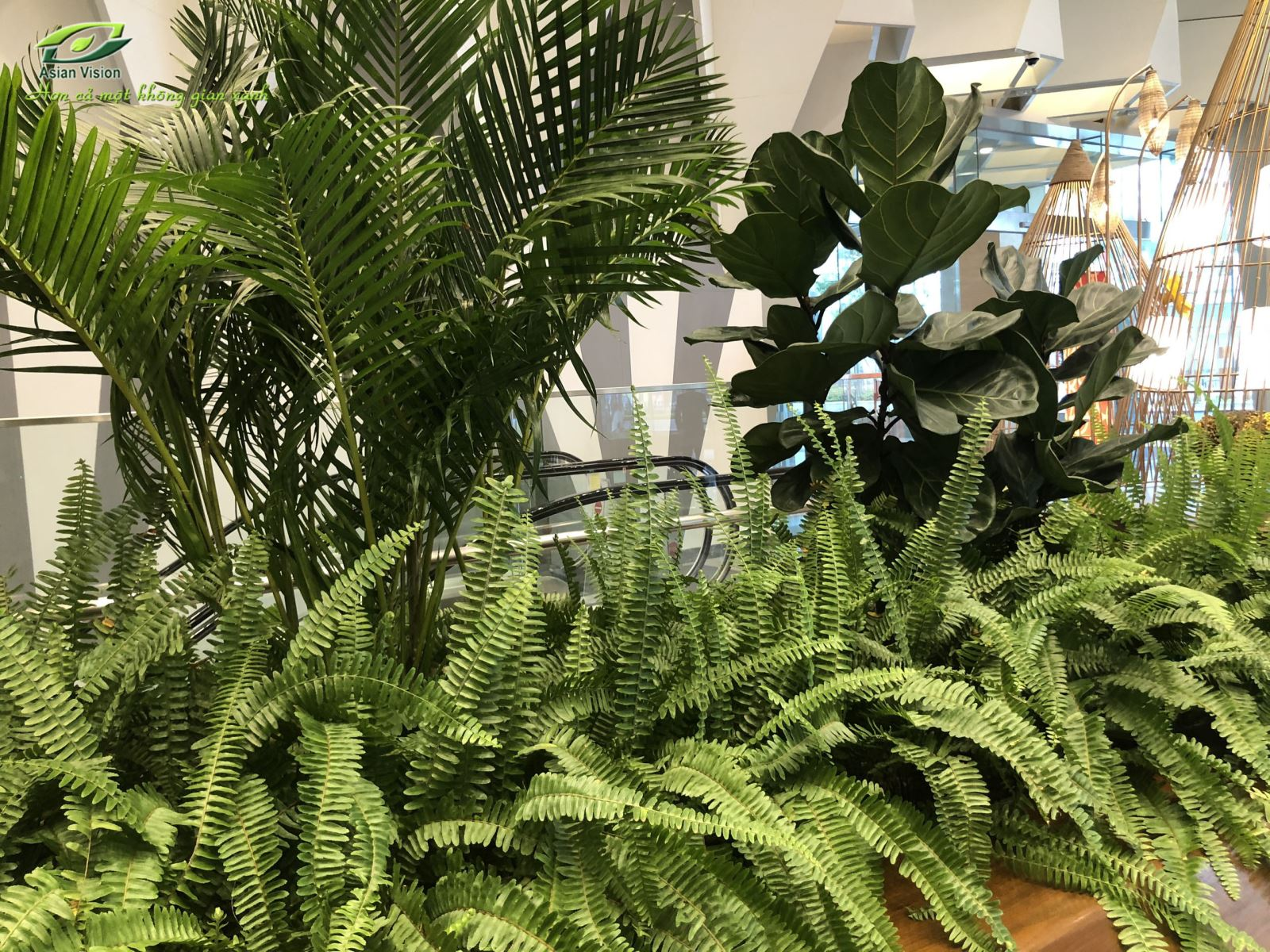 Top 5 loại cây nội thất xua tan nồm ẩm khó chịu thời điểm giao mùa