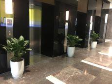 Không gian cây xanh trụ sở Tập đoàn FLC
