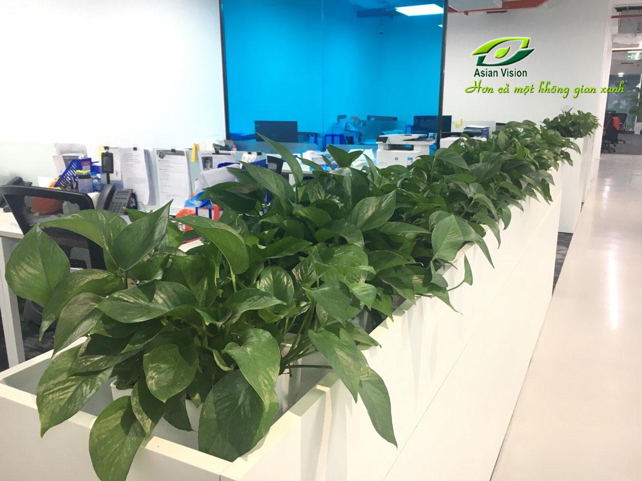 5 loại cây xanh văn phòng lọc không khí cực đỉnh