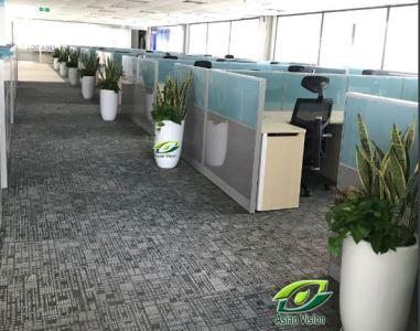 Những loại cây xanh giúp hút sạch chất độc hại có trong môi trường nội thất khuyên bạn không nên bỏ qua
