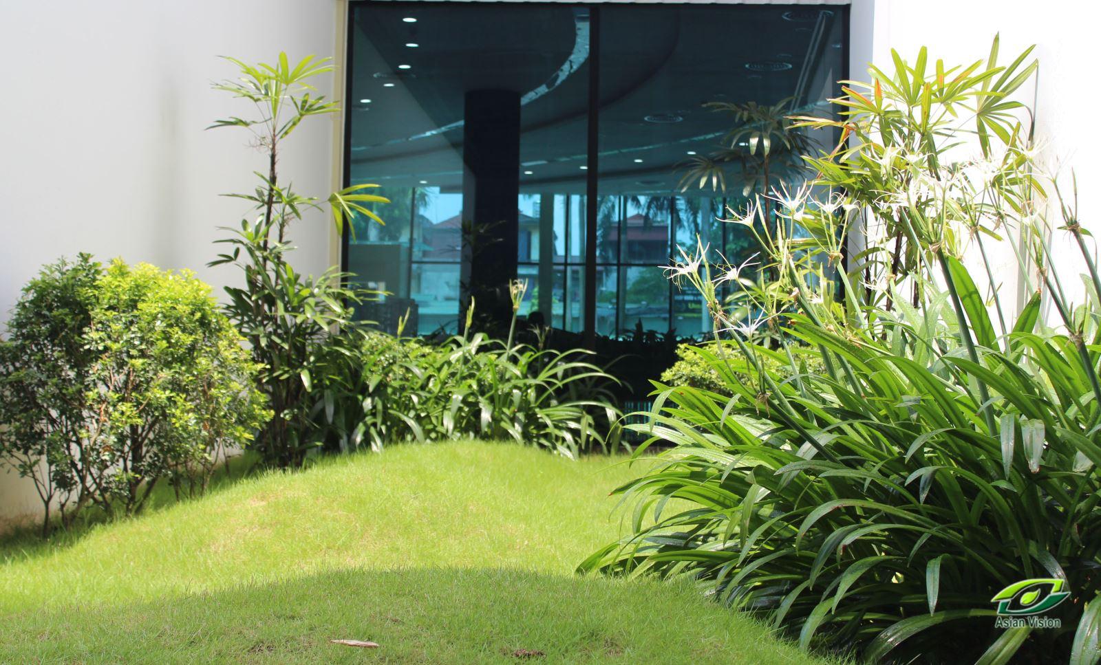 Chăm sóc duy trì cảnh quan nhà mẫu tại dự án Imperia Garden
