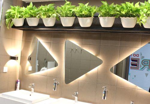 Cây cảnh nhà vệ sinh