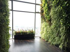 Tường cây xanh nghệ thuật