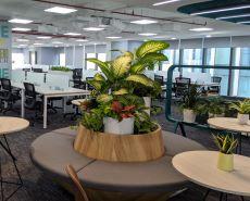 Không gian xanh đẹp tại văn phòng VNPay