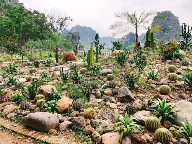 Hoa Cây Cảnh Thủy Bồn - Phong Cách Chơi Cây Cảnh Độc Đáo