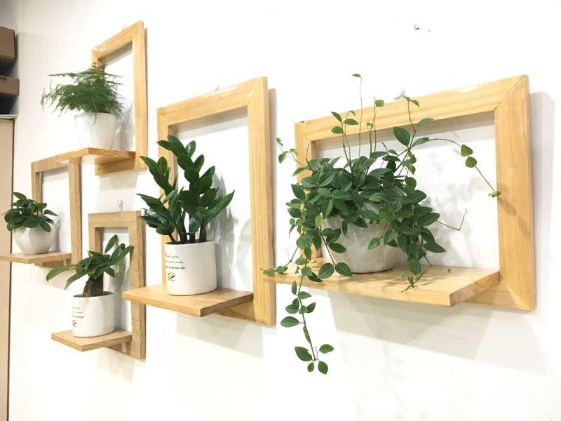 Giải pháp cây xanh cho văn phòng nhỏ hẹp - Phần 2