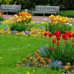 hoa cay canh tham co xanh 1