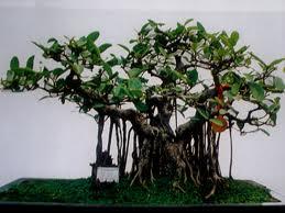 cây cảnh | loc-khong-khi-13