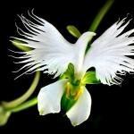 hoa cay canh co trang